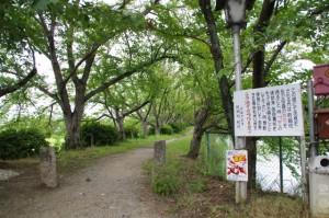 醍醐池の畔の歩道