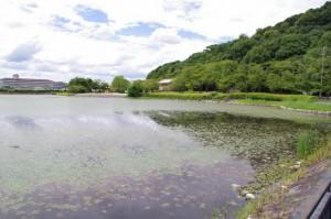 耳成山公園の池