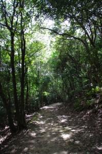耳成山山頂からの下り道