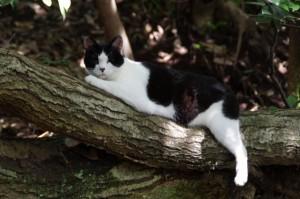 まどろむ猫(耳成山山頂からの下り道)