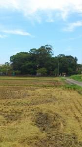 稲刈り後の田んぼと箕曲神社(伊勢市小木町)