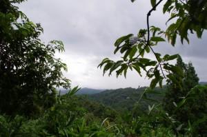穴師神社跡から歴史の道へ