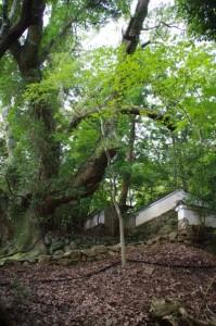 林崎文庫の土塀(大水神社付近)