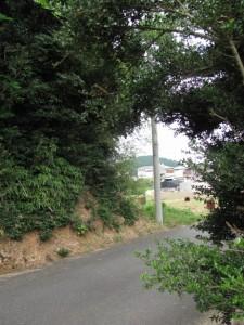 棒原神社の社叢の遠望