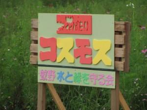 コスモス(蚊野神社から御船神社へ)