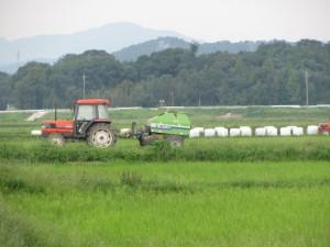 牛の飼料作り(蚊野神社~御船神社の田んぼ)