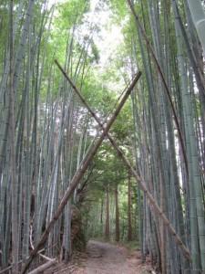 鴨神社への林道入口付近の竹林