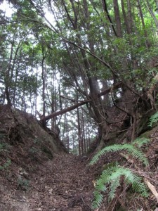 鴨神社への山(参)道