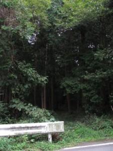 奈良波良神社への道(大池東側付近)