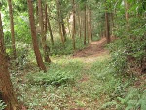 大池東側付近から奈良波良神社へ