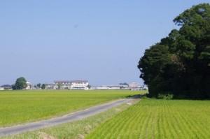 松阪市立機殿小学校の遠望(右側は神麻続機殿神社の社叢)