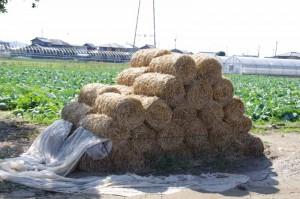藁のピラミッド(御薗神社付近)