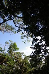 神島灯台から監的哨への遊歩道(神島)