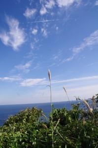 監的哨からニワの浜への遊歩道からの風景(神島)
