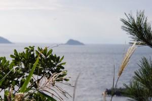 小築海島の遠望(神島)