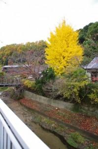 東光寺付近(桜井市)