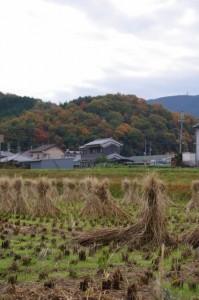桜井南小学校付近から鳥見山緑地方向の遠望