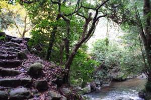 不動延命の滝付近
