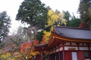 (5)権殿(談山神社)