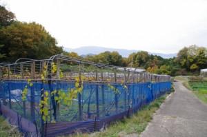 果樹園(万葉展望台~飛鳥坐神社)