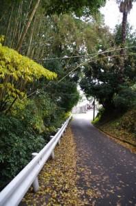 明日香村東山(万葉展望台~飛鳥坐神社)