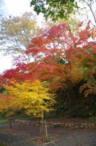 甘樫丘での紅葉