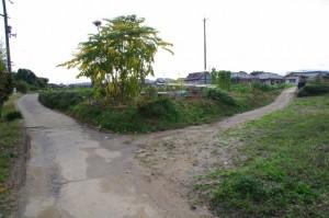 和田池(明日香村豊浦)から住宅街へ
