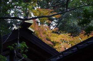 紅葉(猿田彦神社)