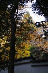 大水神社から望む紅葉(林崎文庫)