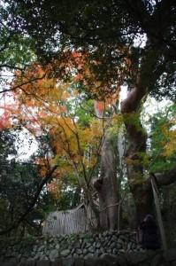 紅葉(大水神社)