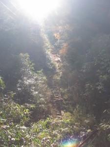 ケーブルカー跡に架かる橋からの風景(朝熊岳道)