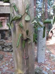 朝熊山神社(朝熊岳道)
