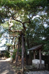 辰の井(御食神社)
