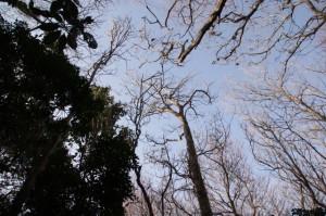 日の出の森 山頂広場~獅子ヶ岳