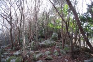 獅子ヶ岳への分岐付近