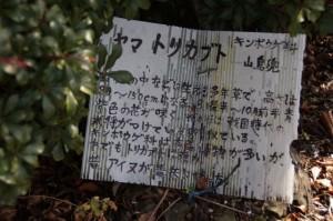 ヤマトリカブトの説明板(獅子ヶ岳山頂)