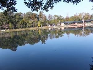 茜社(伊勢市豊川町)からの勾玉池の風景