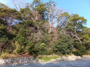 大水神社の社叢