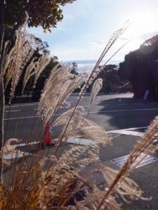 駐車場から望む宇治橋前