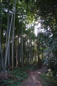 三瀬の渡し場跡(宮川)から多岐原神社へ