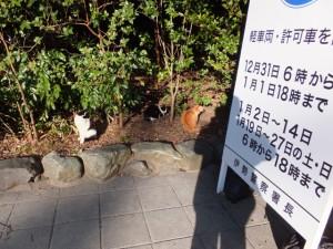 内宮前の野良猫