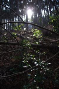 朝熊峠~朝熊ヶ岳山頂