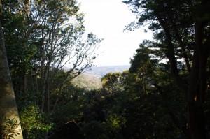 庫蔵寺のイスノキ樹叢