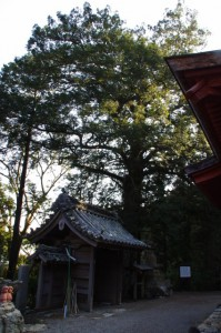 山門とコツブガヤ(丸興山庫蔵寺)