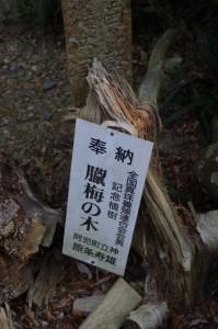 臘梅の木(丸興山庫蔵寺)