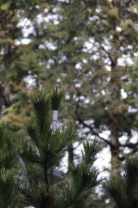 五身懸祭 - 苗松先端の幣(川添神社)