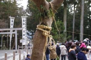 五身懸祭 - 苗松を固定する三本の縄のなかの一本(川添神社)