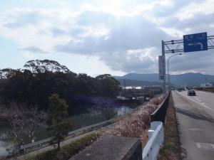 国道23号線から望む栄通神社の社叢