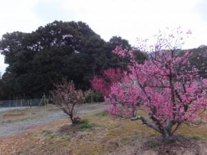 堅田神社付近