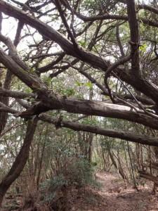 音無山園地から太江寺への下り